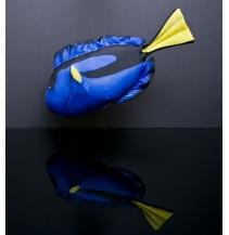 Bodlok pestrý mini - 32 cm polštářek